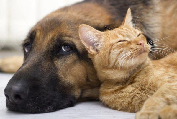 Los seguros de mascotas también existen